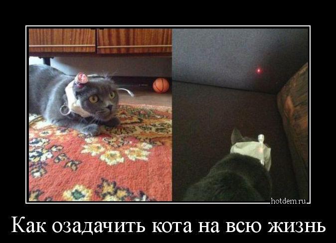 hotdem_ru_053189014840283643979.jpg