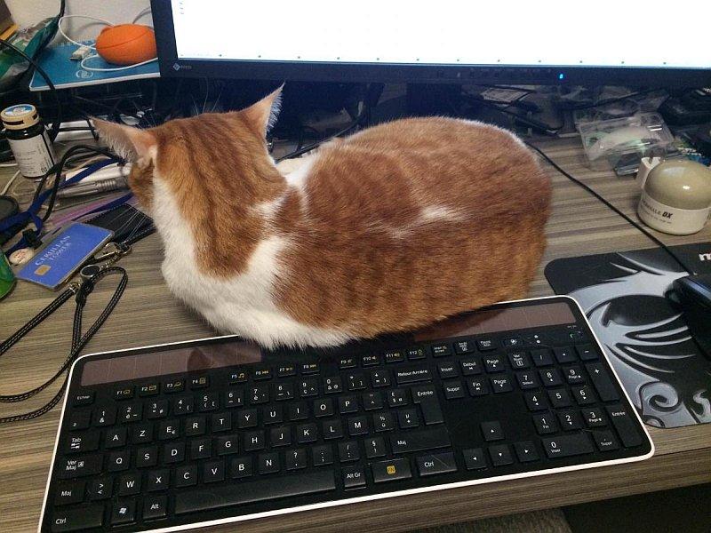 Tibanne_Cat.jpg