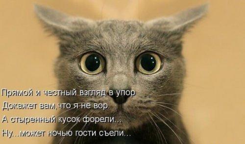 post-18549-0-48816500-1448379999_thumb.jpg