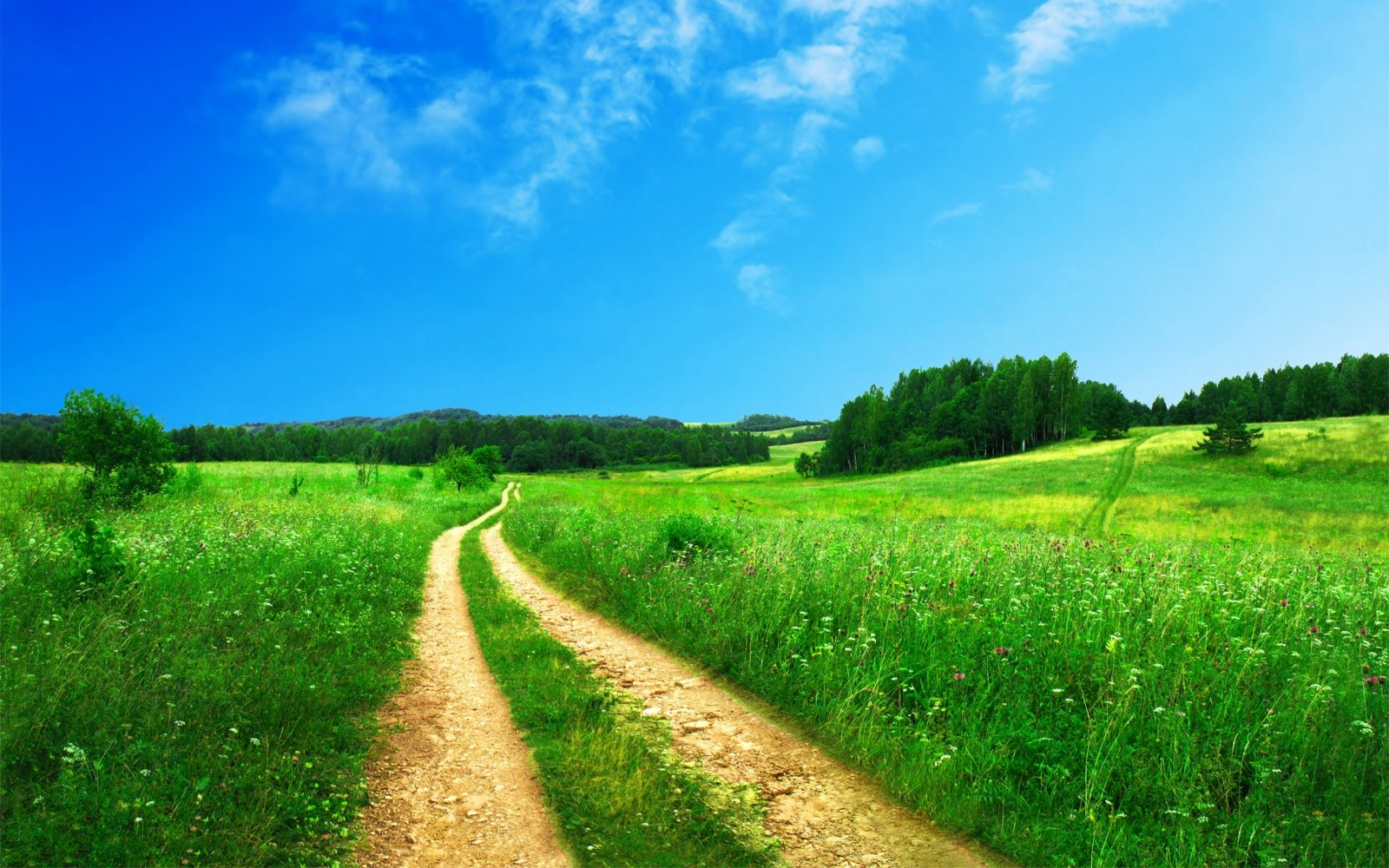 trava-priroda-doroga-leto.jpg