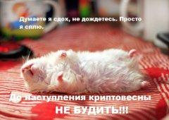 homyachok_1_0.jpg