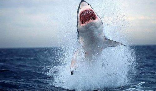 Shark_10.jpg
