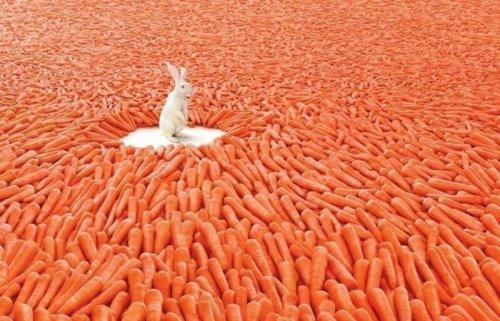 морковка.jpg