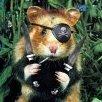 Digital hamster